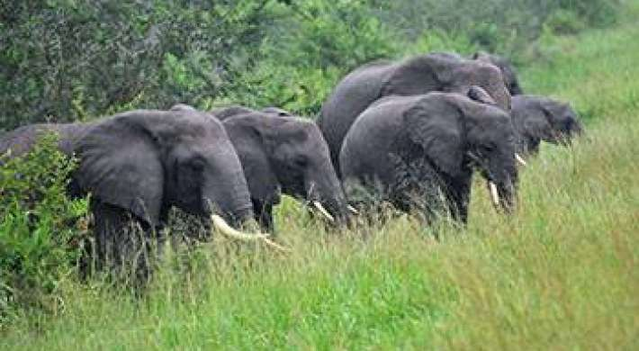 Conservation - Tracking Elephants from Space