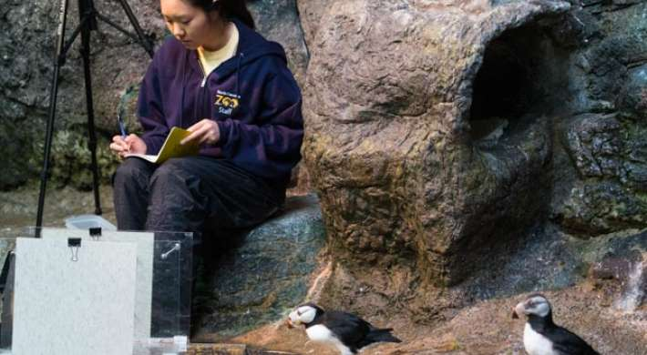 College intern observing puffins
