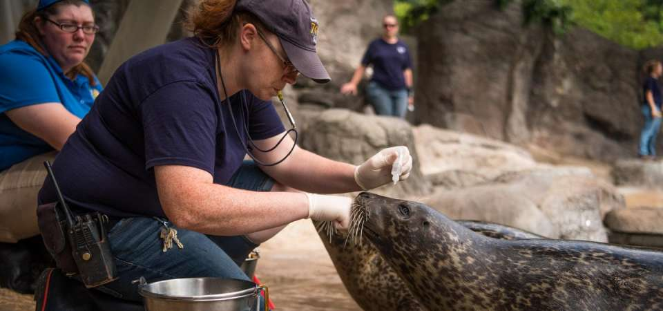 Animal care and wellness of the harbor seal