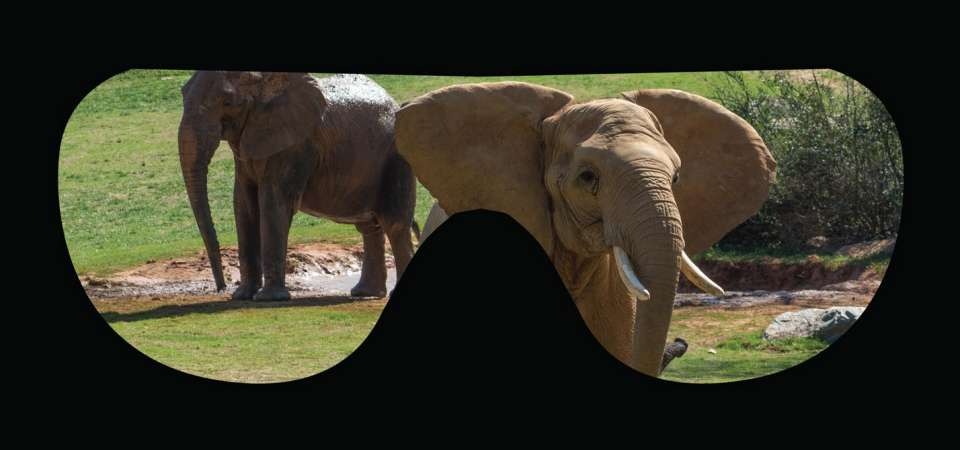 Virtual Reality of Elephants at the Expedition Africa Attraction
