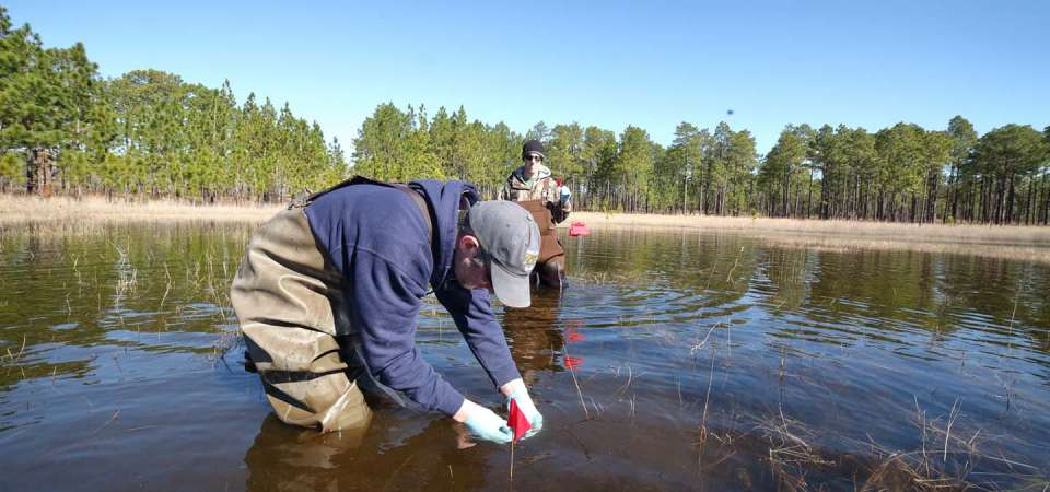 Gopher Frog Conservation in Sandhills