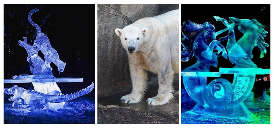 Ice carving event for polar bears