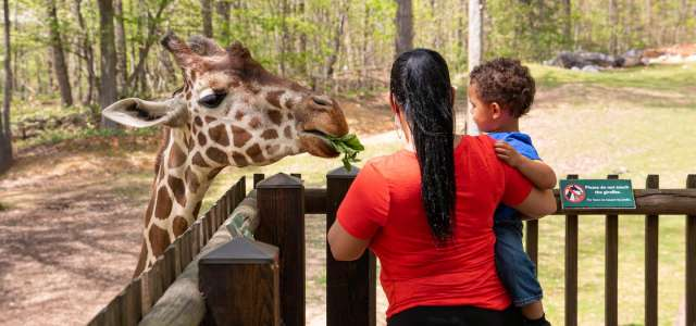 Mother and toddler son feeding a giraffe at the observation deck